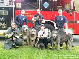 Quick response saves residence and 6 dogs from home in Inverness